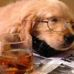 Tired-Dog