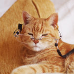 old-cat