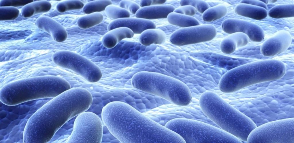 Probiotic bacteria - Rx Biotic