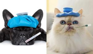 Sick Pets