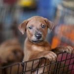 Pet Store Pup