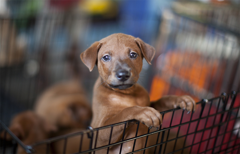 Uk Bans Pet Shop Sales Of Puppies And Kittens Rx Vitamins For Pets